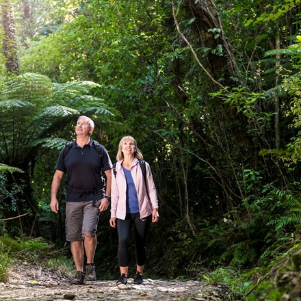Couple walk through native New Zealand forest along the Queen Charlotte Track in the Marlborough Sounds.